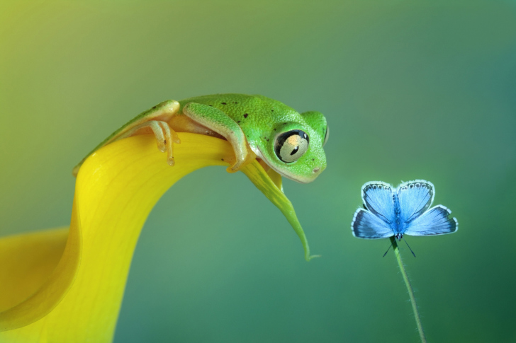 Fondo de pantalla Frog and butterfly