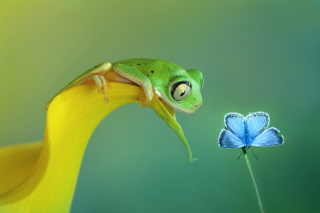 Frog and butterfly Wallpaper for Android, iPhone and iPad