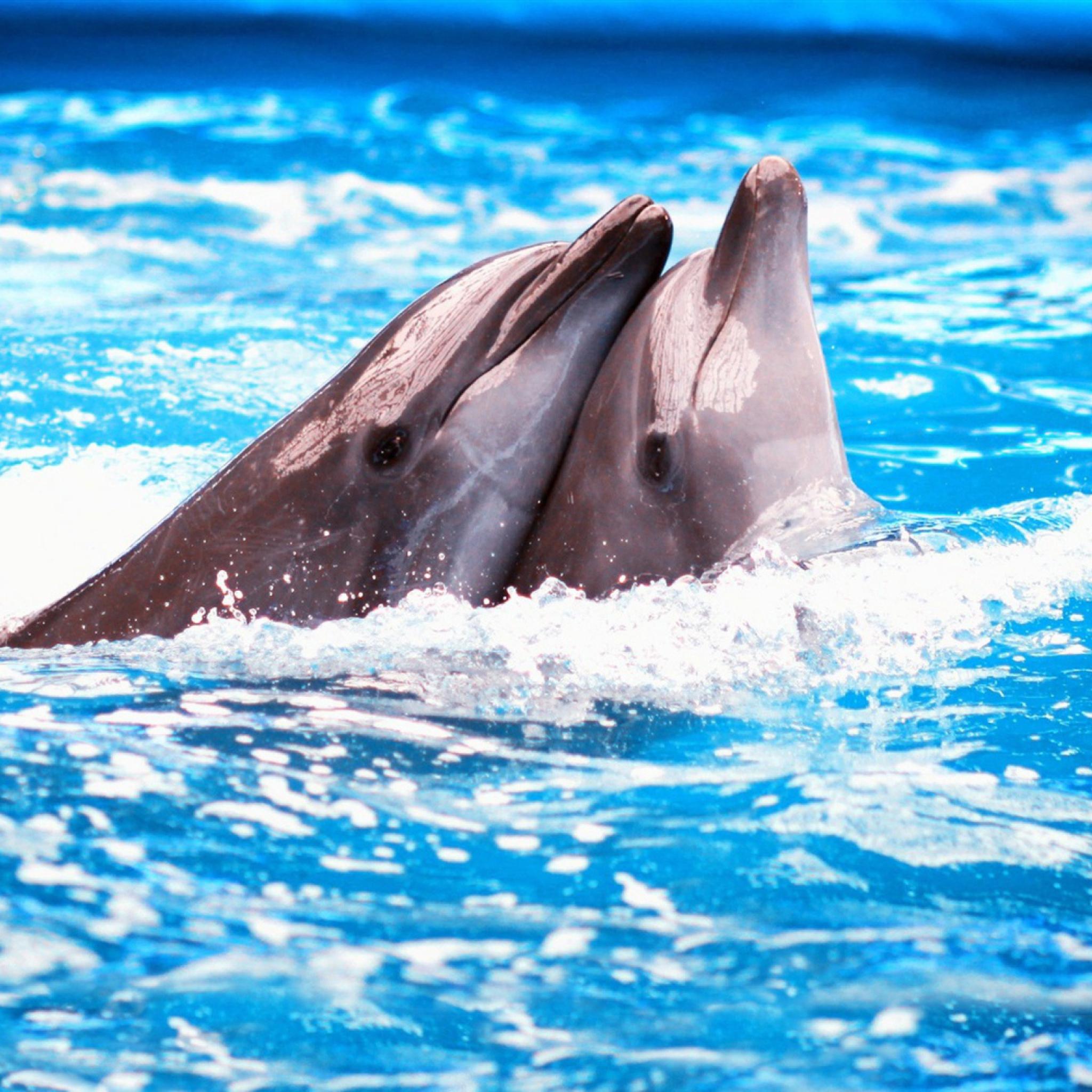 дельфин крупным планом бесплатно