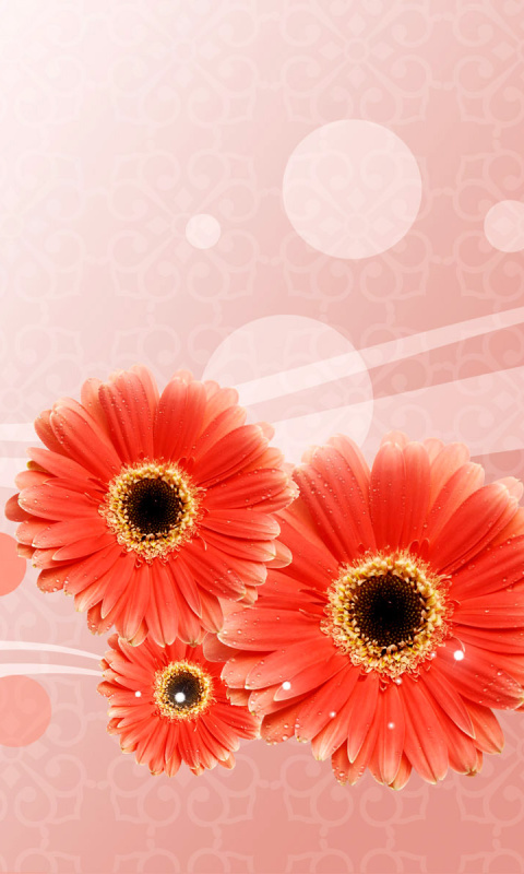 Screenshot №1 pro téma Card with gerberas 480x800