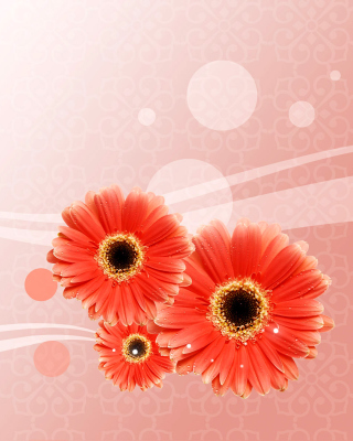 Free Card with gerberas Picture for Nokia C1-01