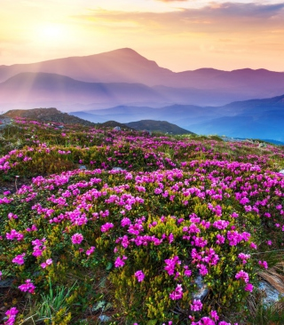 Purple Flower Landscape Wallpaper for 132x176