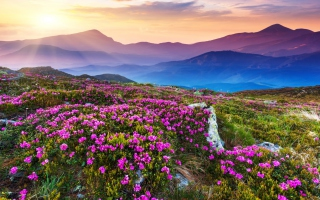 Purple Flower Landscape Wallpaper for 1280x1024