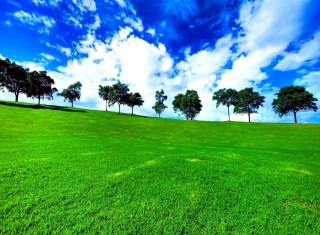 Free Green Landscape Picture for Android, iPhone and iPad
