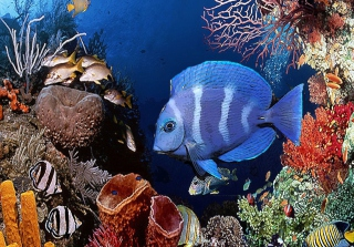 Free Tropical Blue Fish Picture for Android, iPhone and iPad