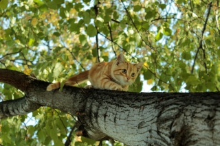 Cat Climbing A Tree Background for Android, iPhone and iPad