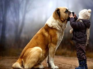 I Love Dogs for Nokia Asha 200