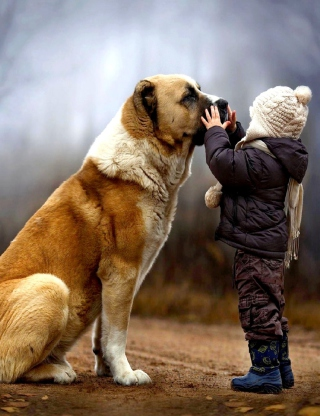 I Love Dogs Background for 480x800