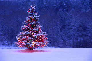 Illumninated Christmas Tree Wallpaper for Android, iPhone and iPad