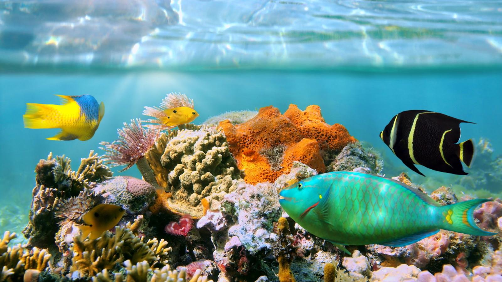 Рыбы коралловых рифов картинки с надписями, своими руками