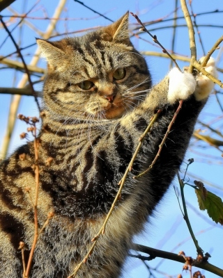 Обои Cat on Tree для Nokia Asha 503
