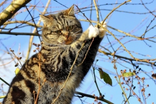 Cat on Tree sfondi gratuiti per cellulari Android, iPhone, iPad e desktop