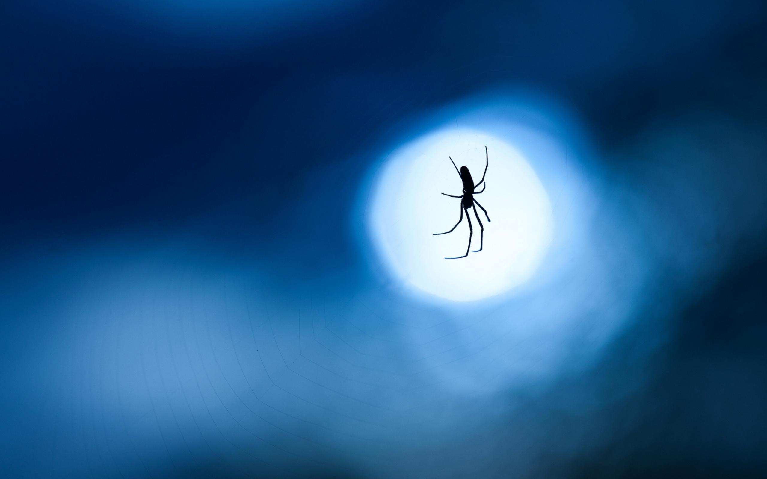 паук паутина скачать