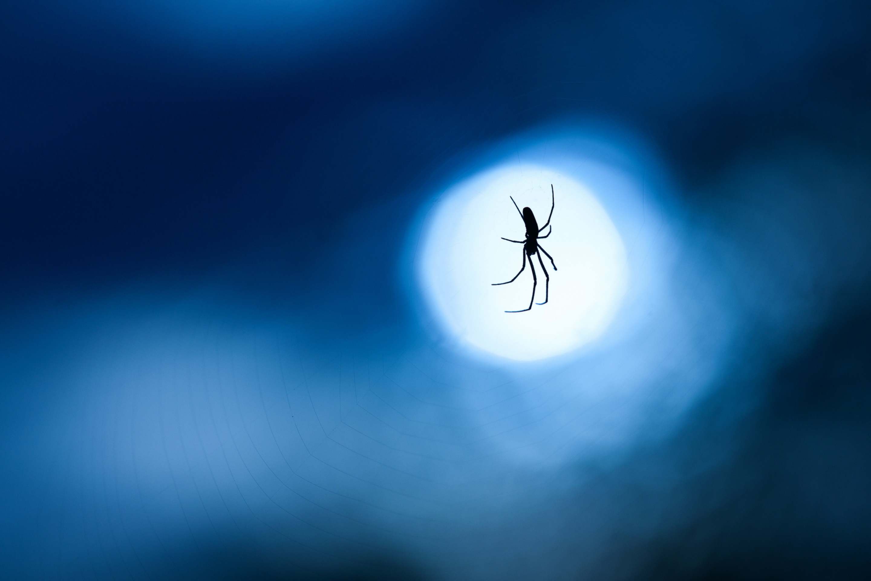 Обои Spider In Moonlight 2880x1920