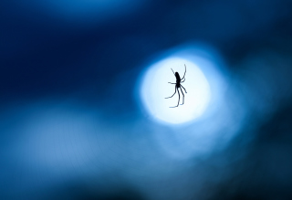 Обои Spider In Moonlight для Android 2880x1920