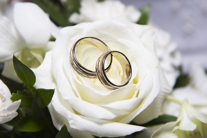 Wedding Rings And White Rose wallpaper