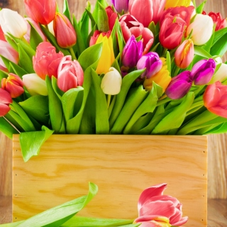 Bunch of tulips - Fondos de pantalla gratis para 1024x1024