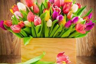 Bunch of tulips Wallpaper for Android, iPhone and iPad