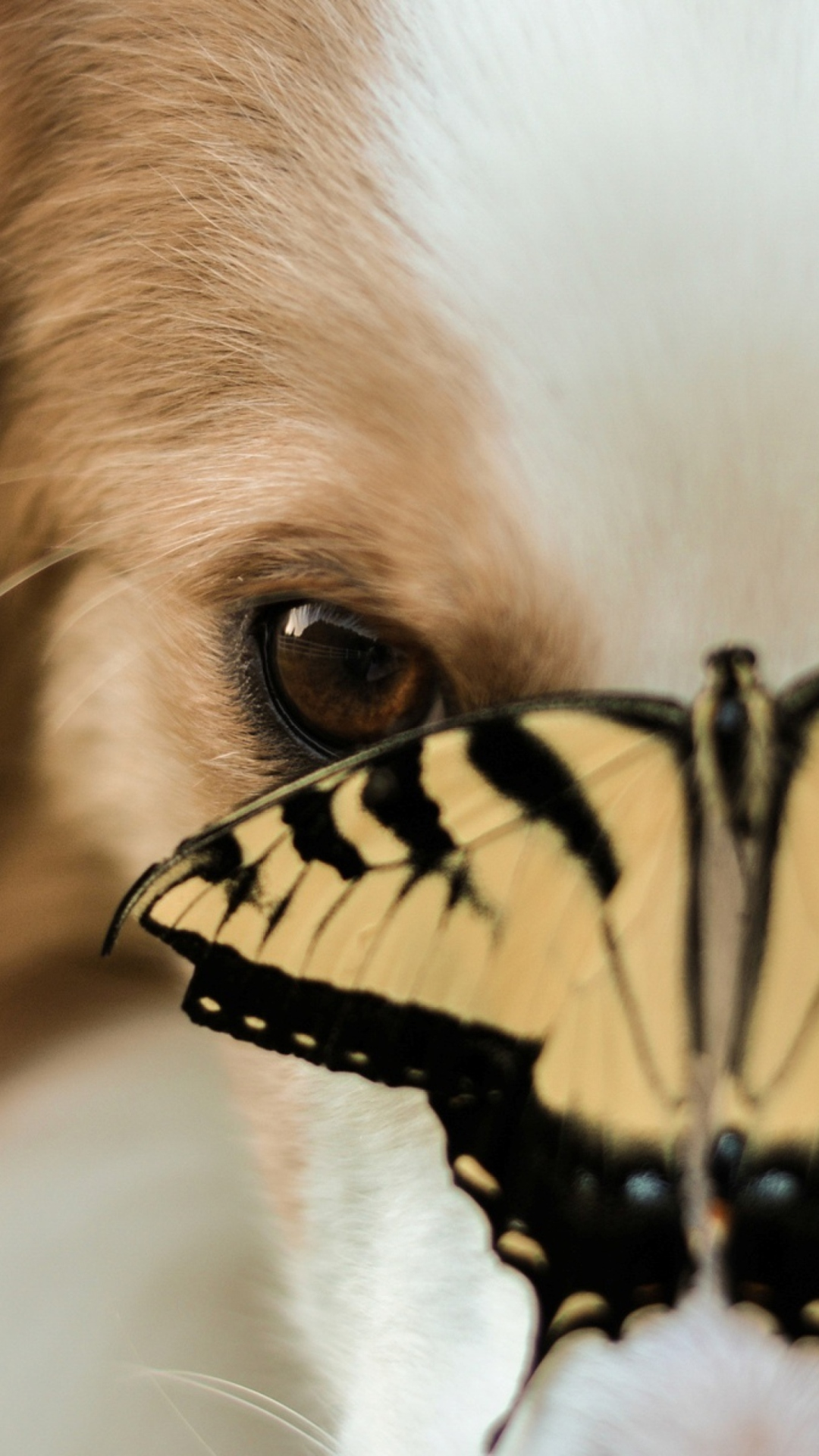 I ordered the medium for my 20b pug Same build as the dog in the picture But Im not impressed at all 1 The wing color is not orange like a monarch butterfly