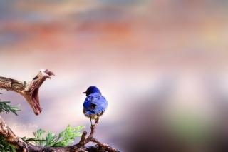 Blue Bird And Snake Background for Android, iPhone and iPad