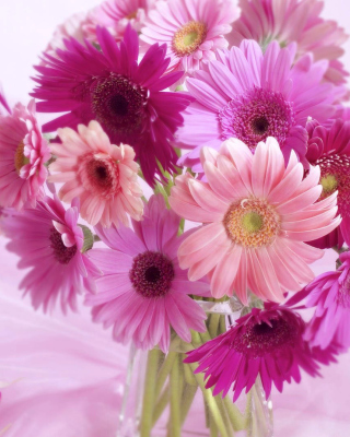 Gerbera Bouquet Idea Wallpaper for Nokia C1-01