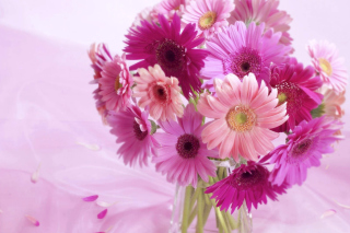Gerbera Bouquet Idea Wallpaper for Android, iPhone and iPad