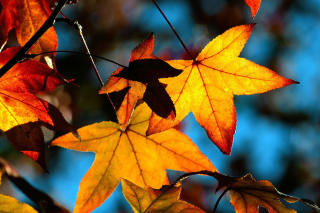 Autumn Leaves Picture for Android, iPhone and iPad
