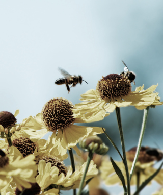 Bees Buster Wallpaper for Nokia Asha 306