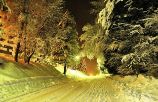 Free Cold Winter Night Forest Picture for Android, iPhone and iPad