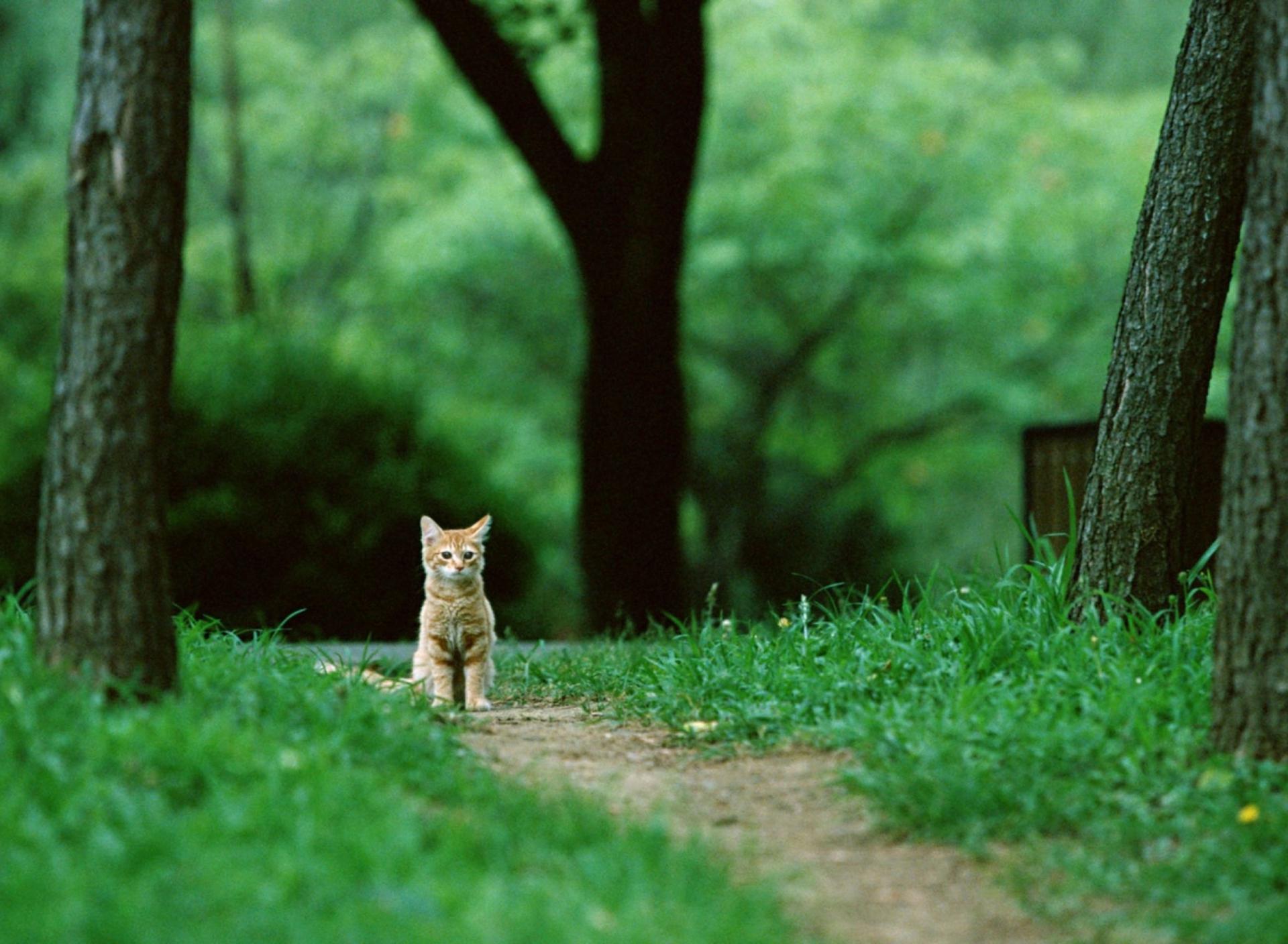 Два рыжих кота на дороге скачать