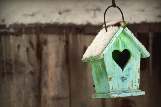 Valentine's Birds House Wallpaper for Android, iPhone and iPad