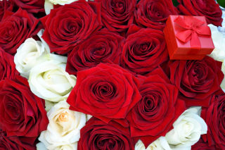 Roses for Propose Background for Android, iPhone and iPad