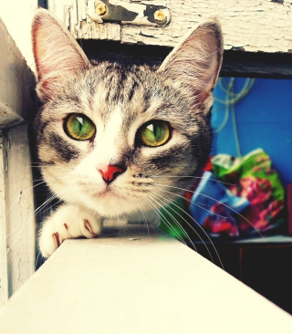 Cute Gray Kitten With Green Eyes sfondi gratuiti per Nokia Lumia 925