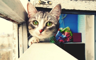 Cute Gray Kitten With Green Eyes - Fondos de pantalla gratis