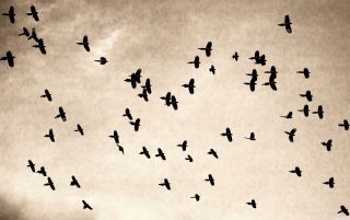 Birds In Sky Wallpaper for Android, iPhone and iPad