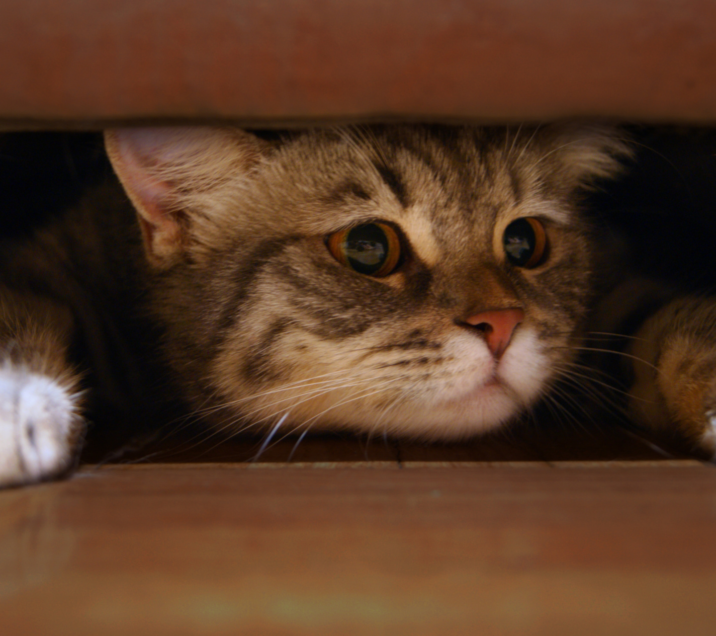 Sfondi Cat Under Bed 1440x1280