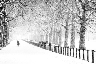 Winter Walk Wallpaper for Android, iPhone and iPad