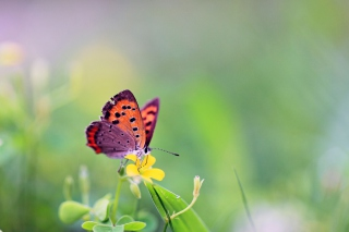 Butterfly And Flower Wallpaper for Desktop 1280x720 HDTV