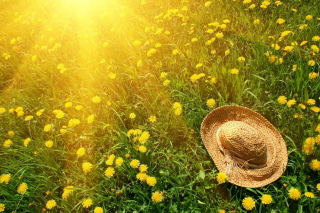 Hat On Green Grass And Yellow Dandelions - Fondos de pantalla gratis