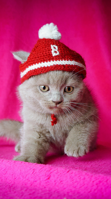 Screenshot №1 pro téma Cute Grey Kitten In Little Red Hat 360x640
