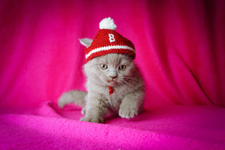 Cute Grey Kitten In Little Red Hat - Obrázkek zdarma