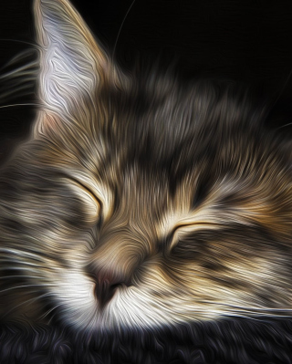 Sleepy Cat Art Picture for iPhone 6 Plus