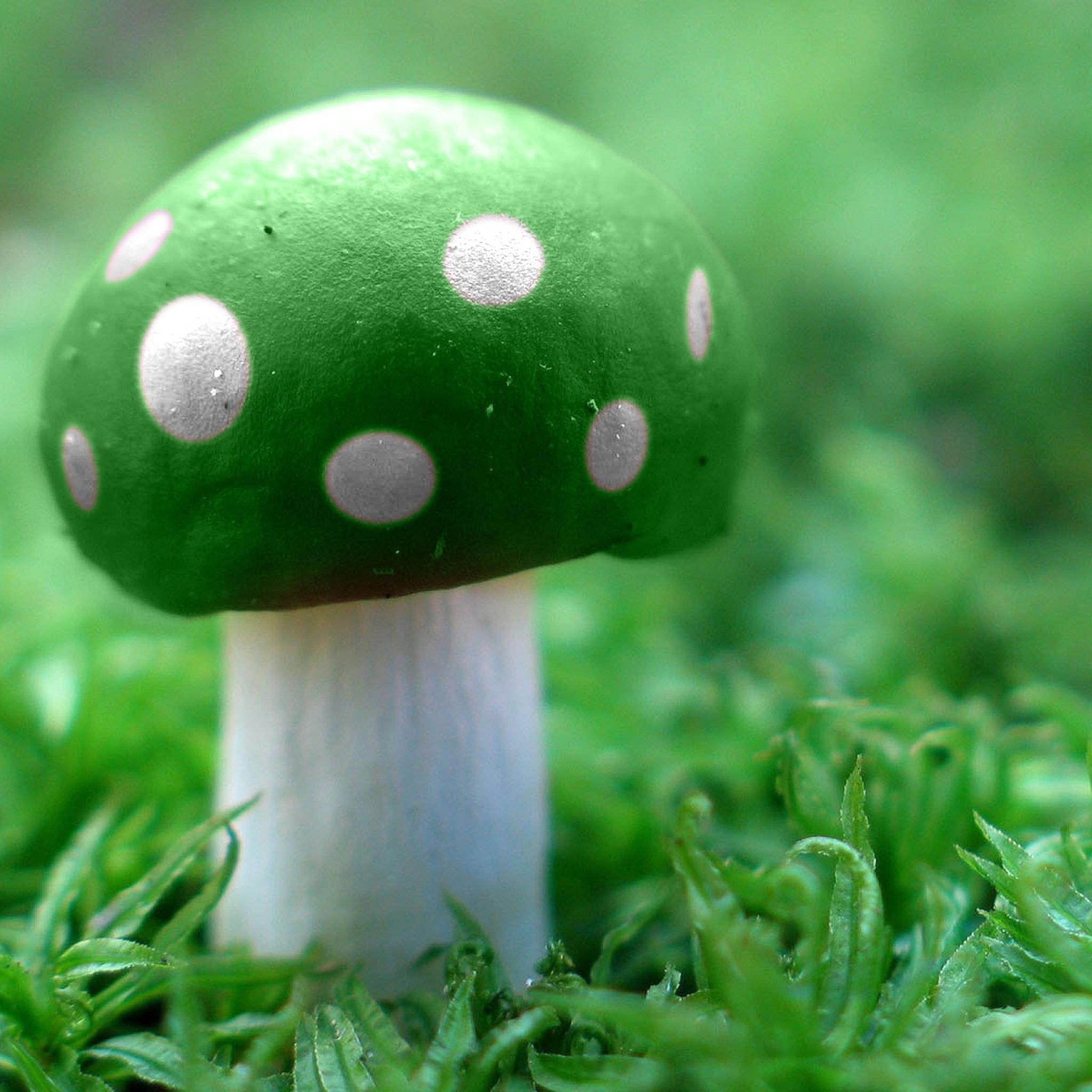 Картинки грибов смешных