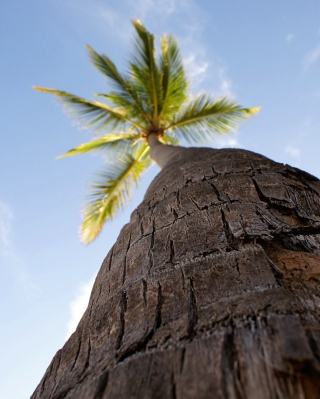Palm Tree Background for Nokia C1-01