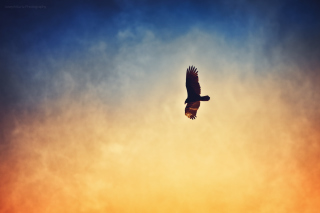 Bird In Sky Background for Android, iPhone and iPad