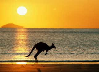 Free Australian Kangaroo Picture for Android, iPhone and iPad