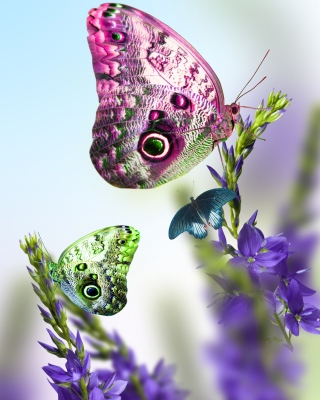 Tender Butterfly HD sfondi gratuiti per iPhone 6