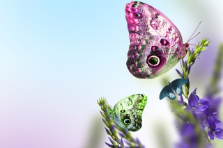 Free Tender Butterfly HD Picture for Android, iPhone and iPad