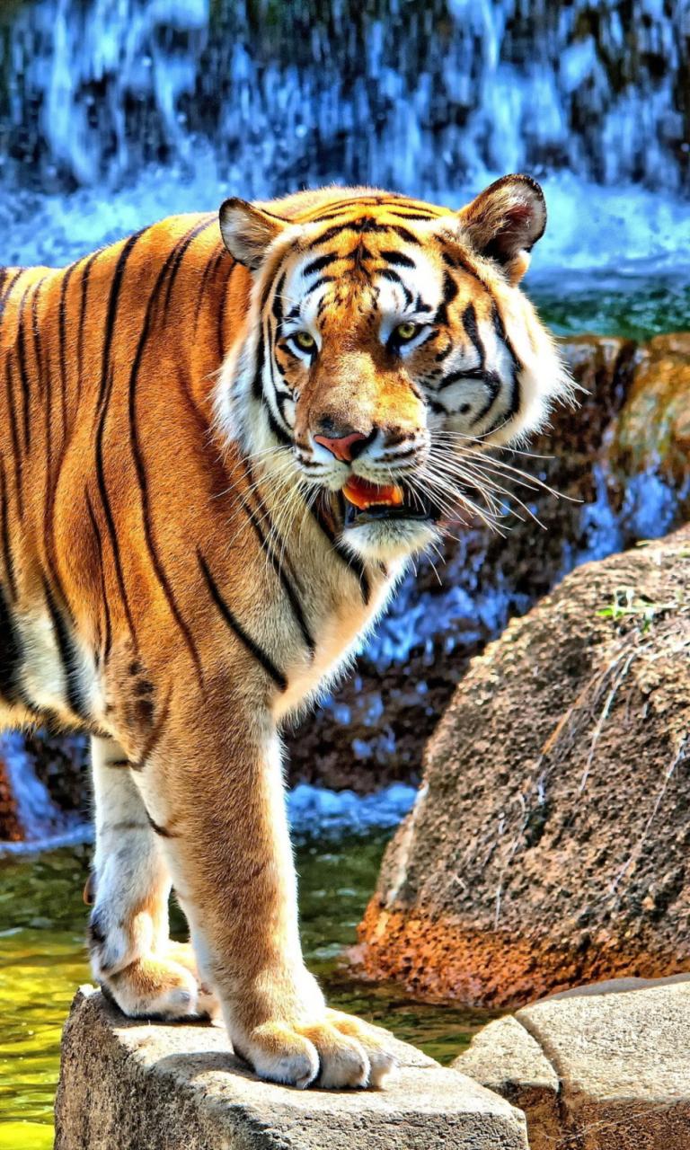 Картинки тигра на телефон, открыток букв сканворд