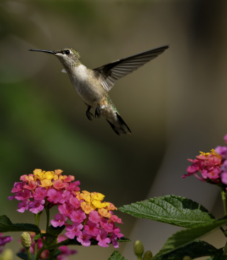 Hummingbird And Colorful Flowers Wallpaper for HTC Titan